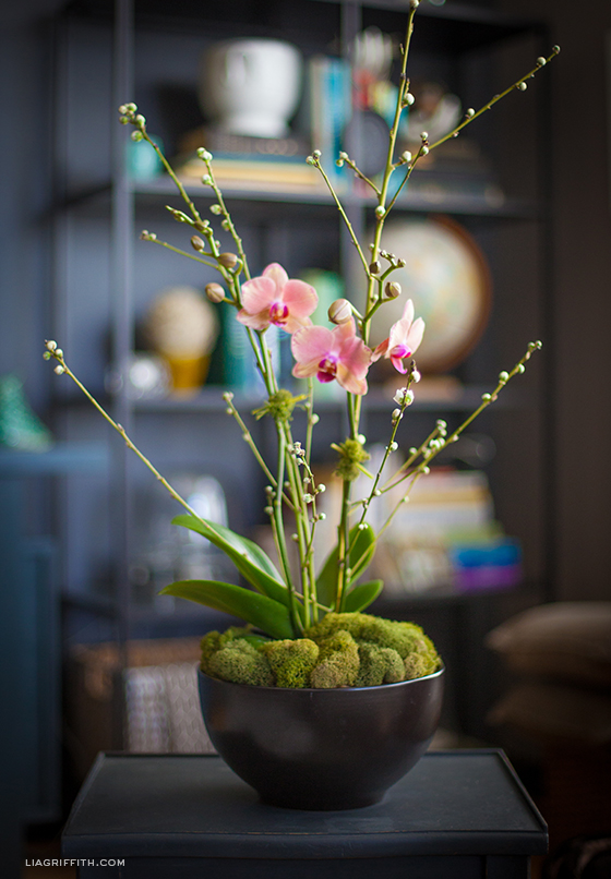 Orchid Plant Home Decoration