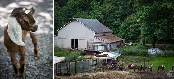 The Little Brown Farm