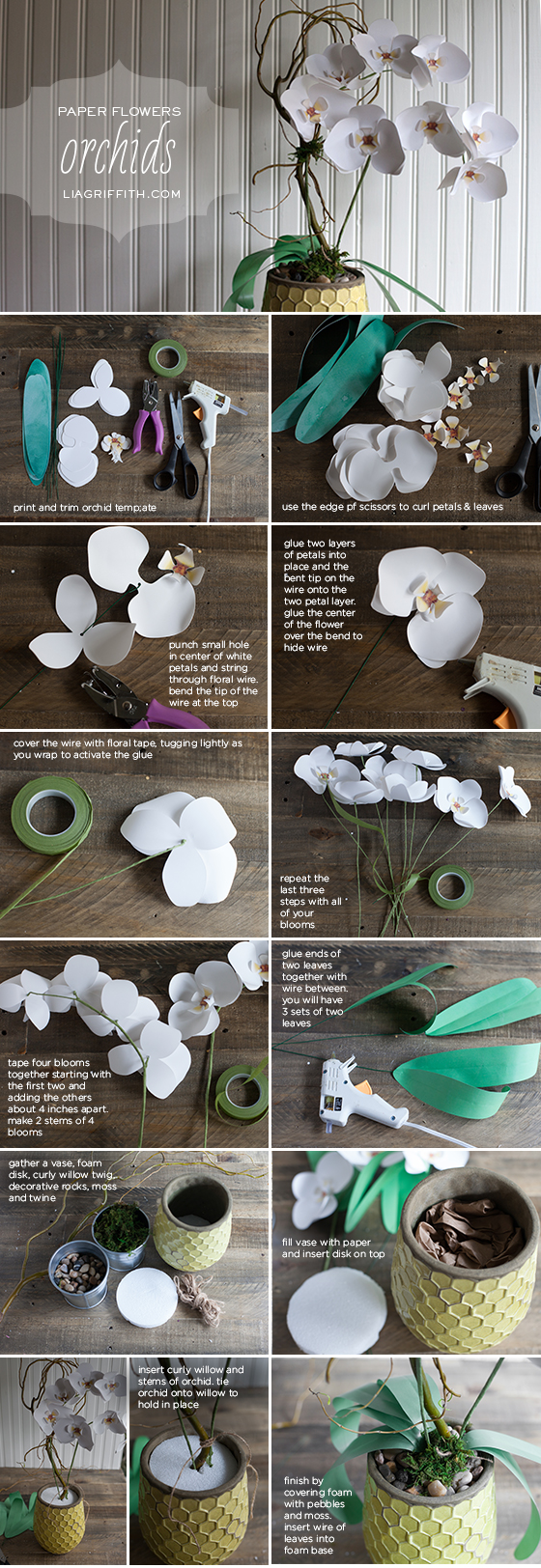 Paper Orchid Tutorial
