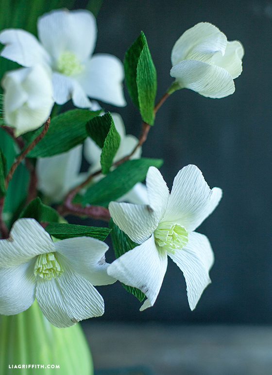 Paper_Dogwood_Blooms
