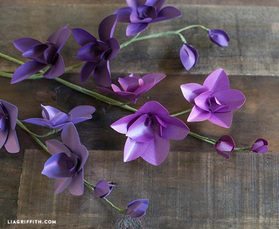 purple paper dendrobium orchids