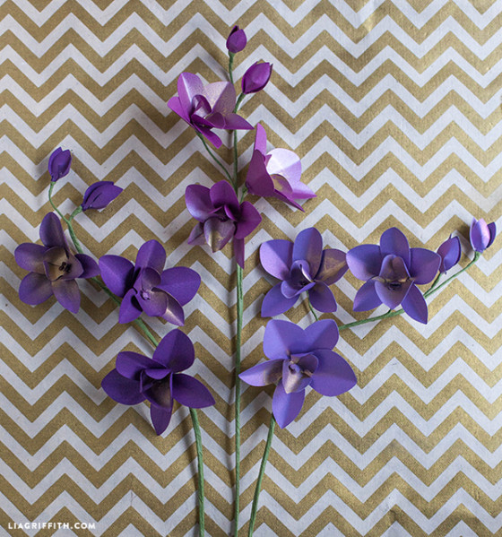 paper dendrobium orchids against gold and white chevron background