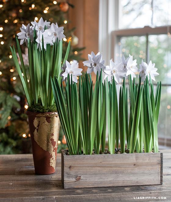 Paperwhites flowers