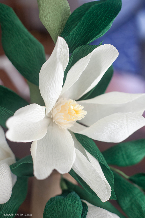 Crepe_PaperMMagnolia_Bloom