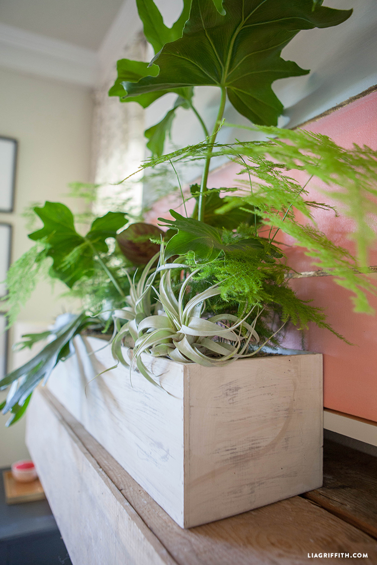 Living_Room_Plant_Scape