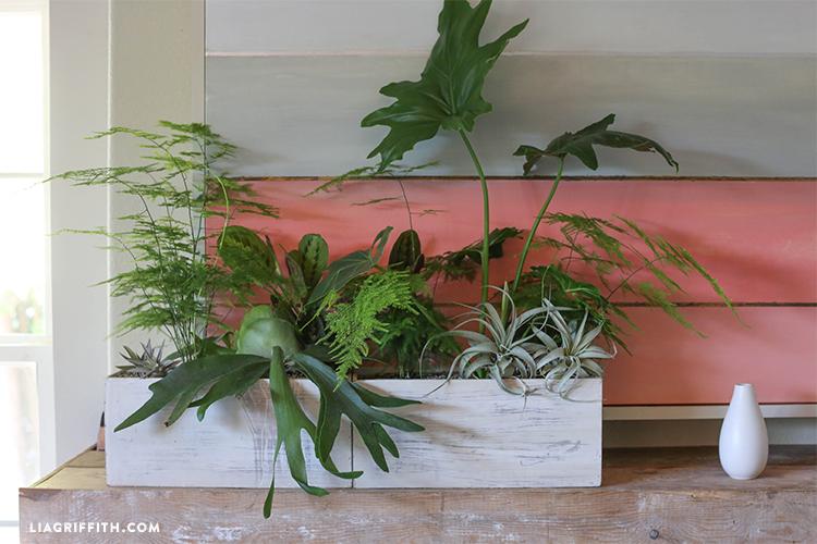 Livingroom_Plant_Scape
