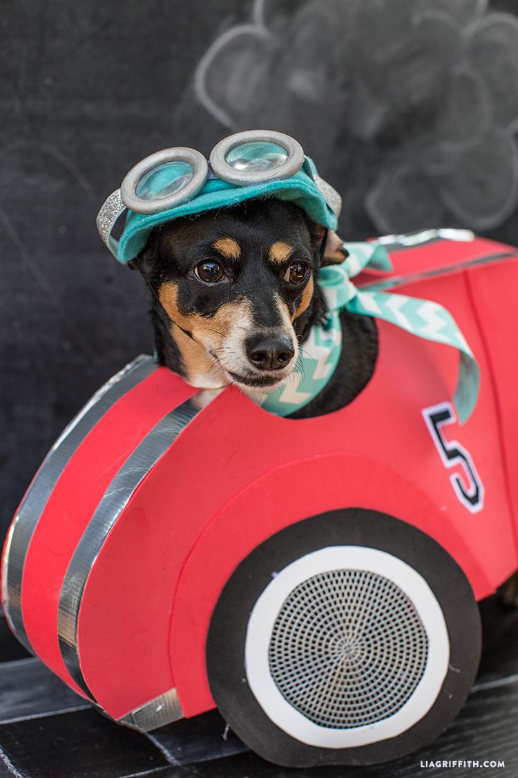 Race car dog costume