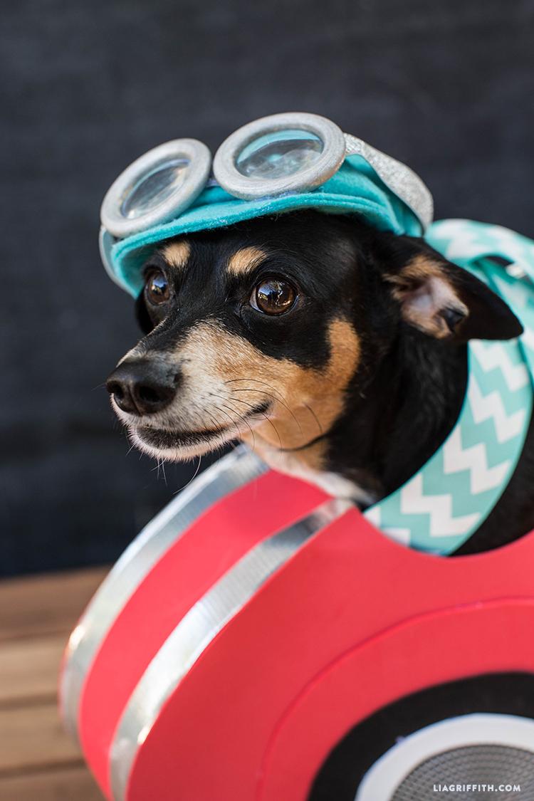 Enzo wearing race car dog costume