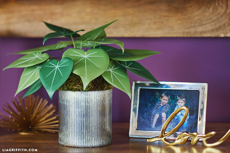 Philodendron_00003