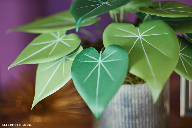 Philodendron_00004