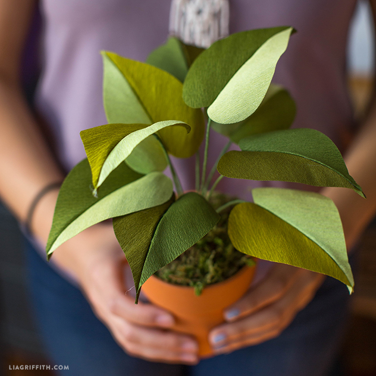 Crepe Paper Philodendron