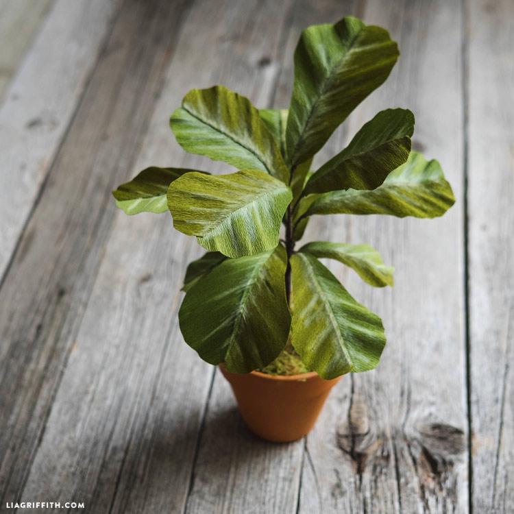 Paper Fiddle Leaf Fig