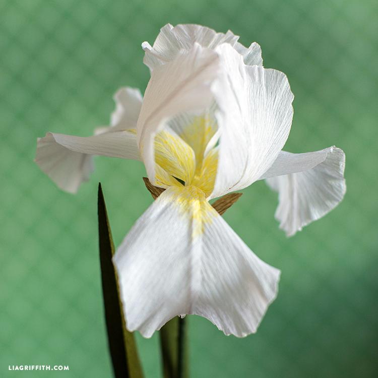 paper iris flower