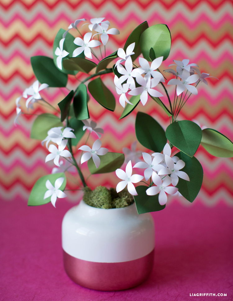 potted paper jasmine plant