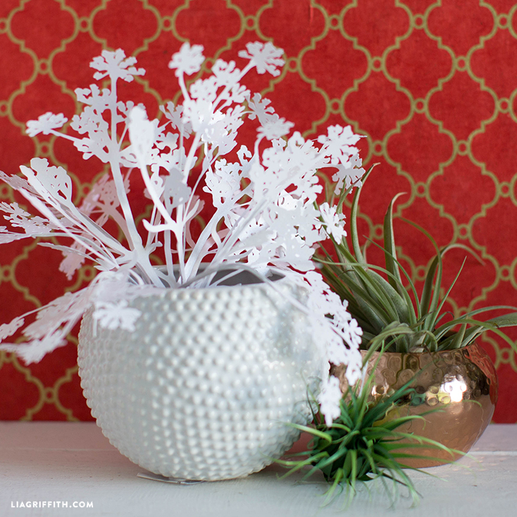 papercut queen anne's lace