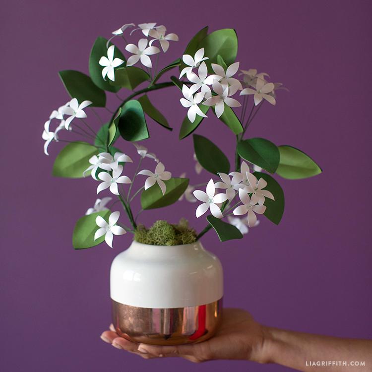paper jasmine plant