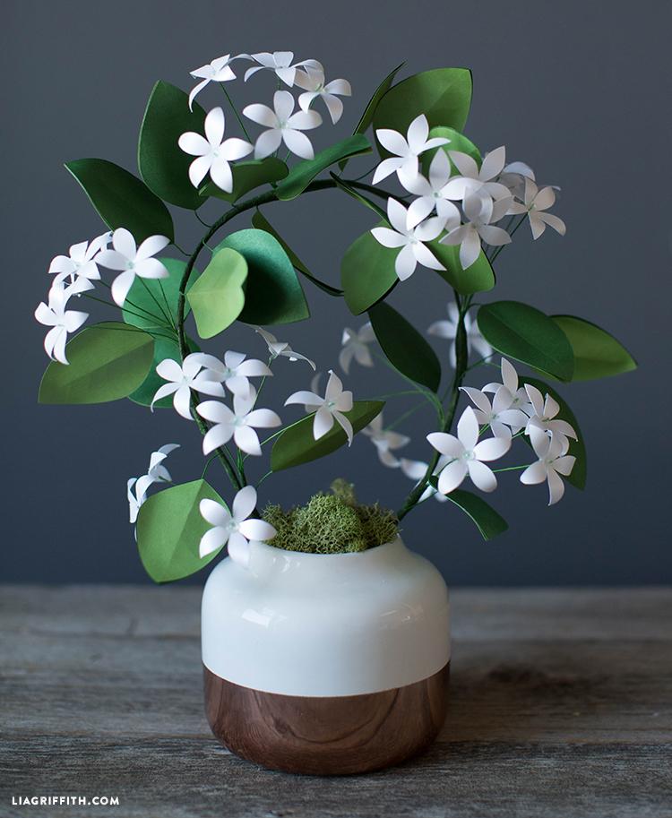 diy jasmine