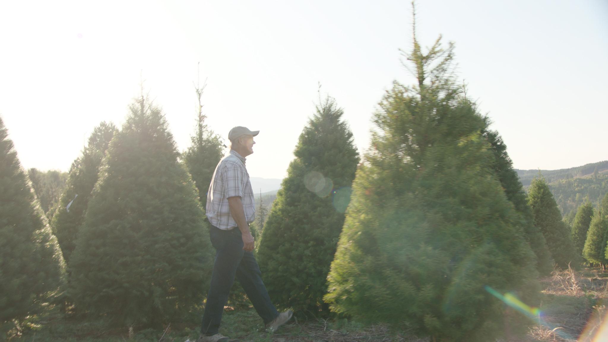 real christmas trees family farm