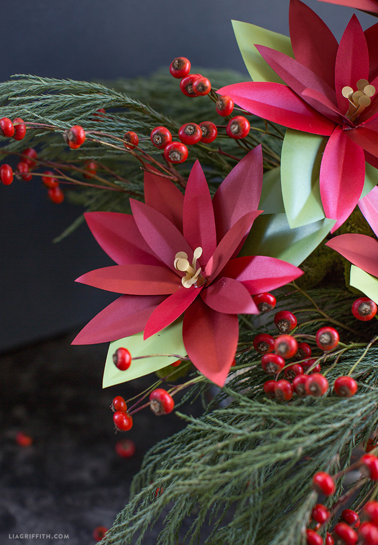 poinsettia plant for holidays
