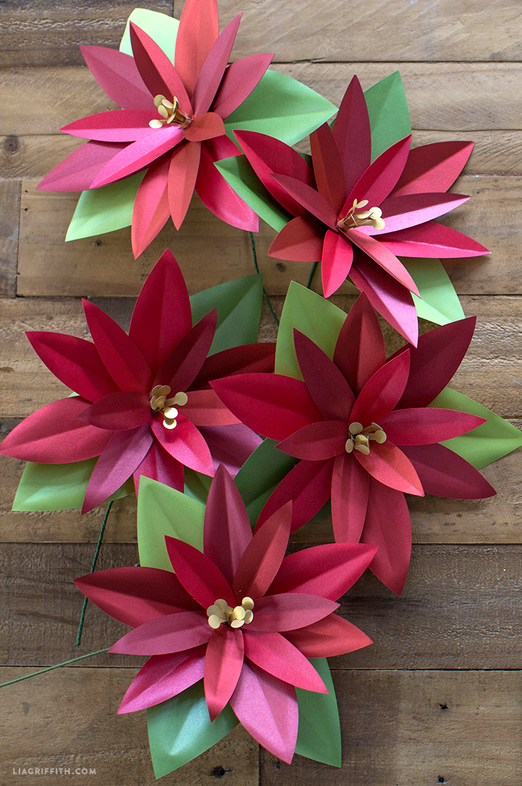 poinsettia plant project