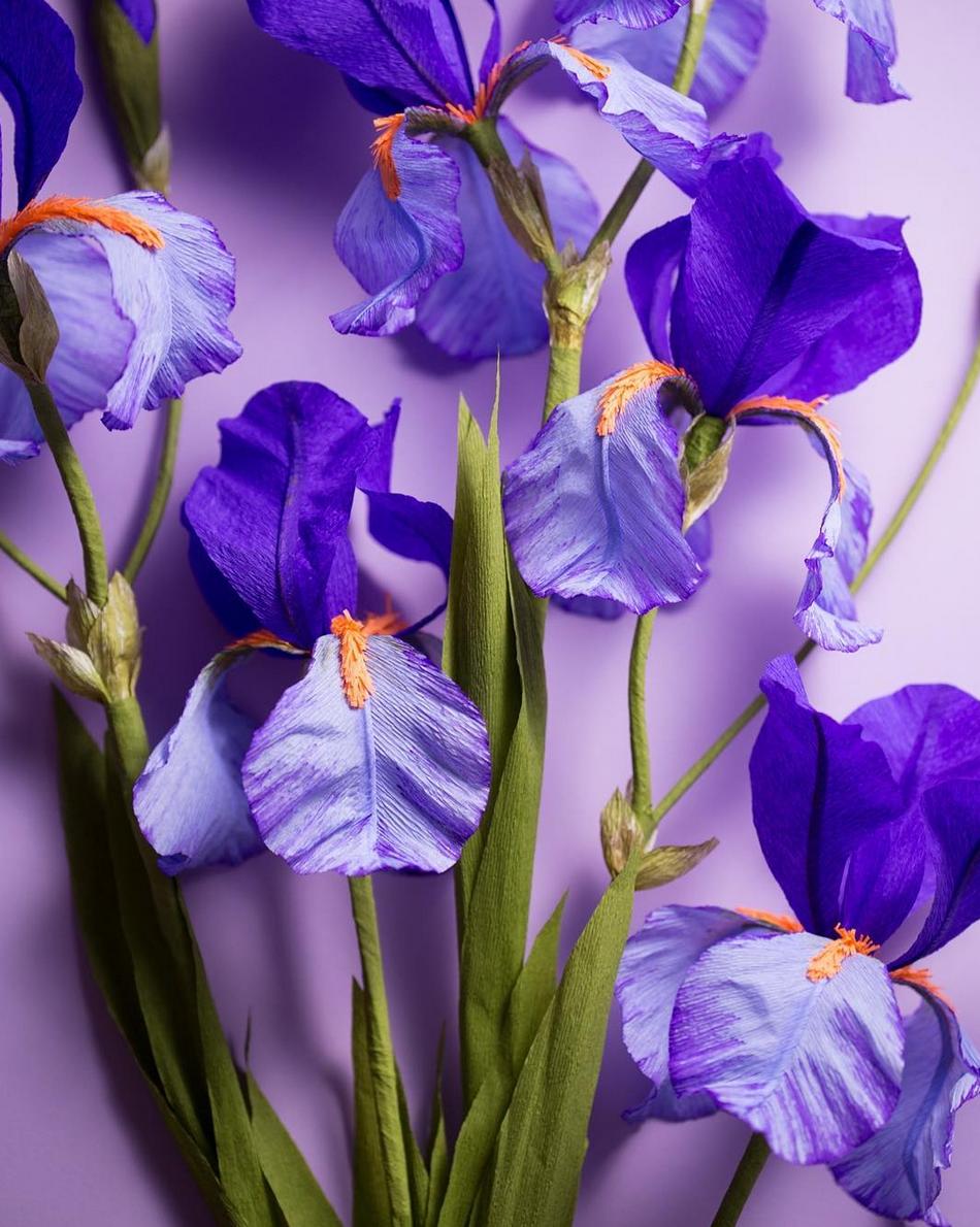paper flower artist jennifer tran