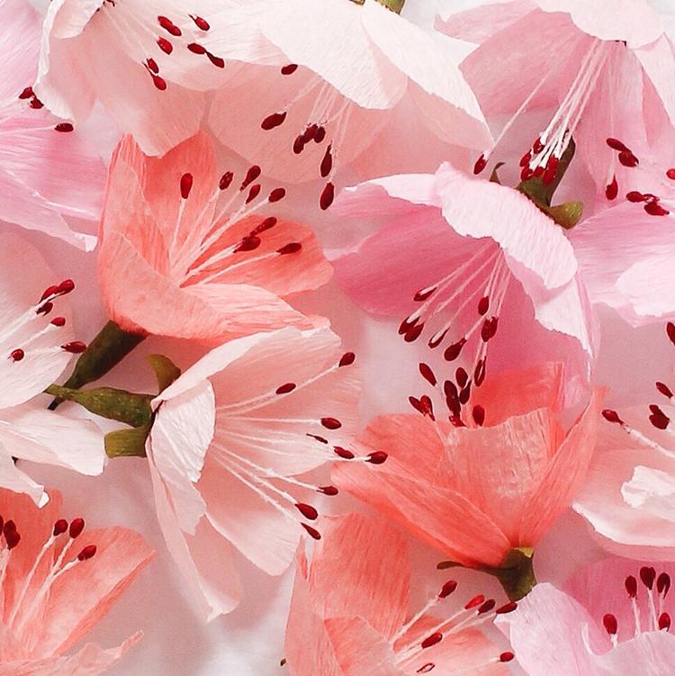 flowers by susan beech