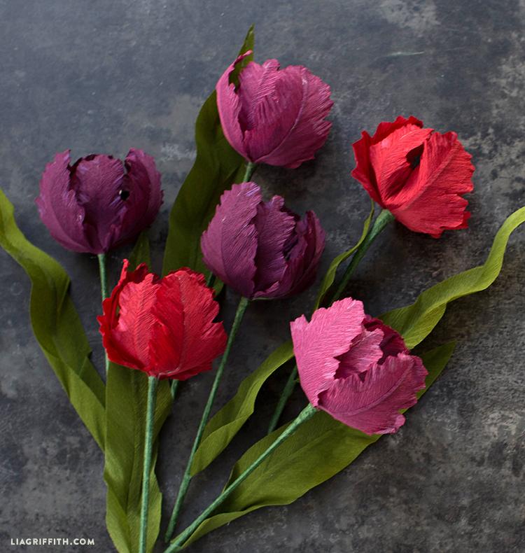diy parrot tulips