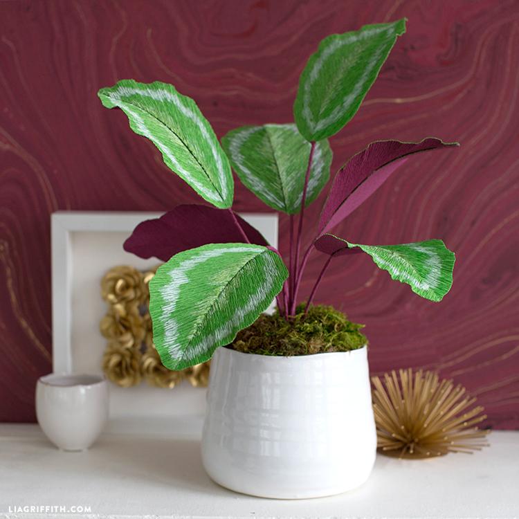 crepe paper calathea plant