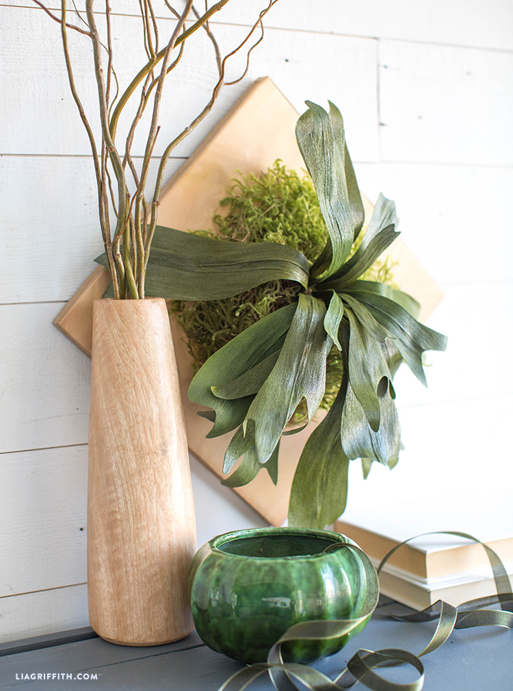 mounted staghorn fern