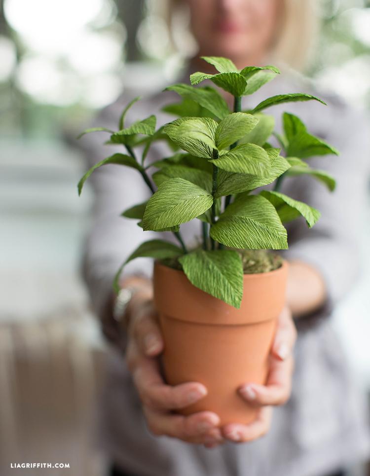 diy basil plant