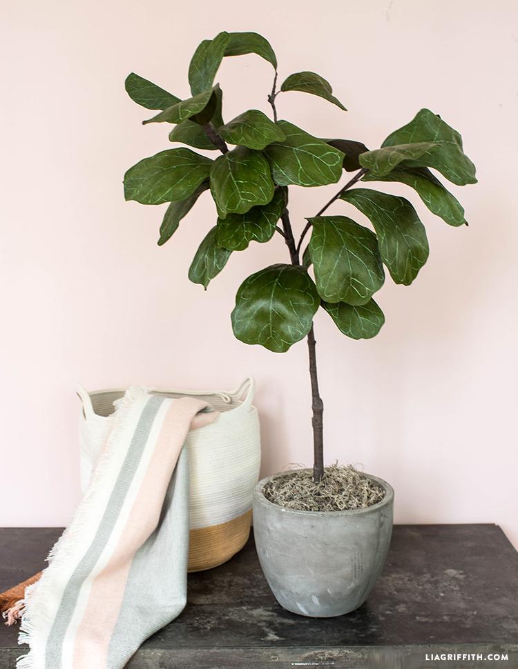 diy fiddle leaf fig tree