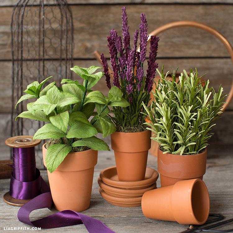 Herb Plant Garden