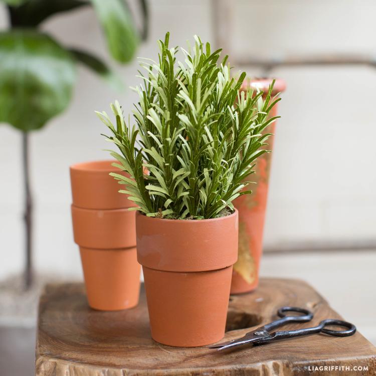 diy rosemary plant