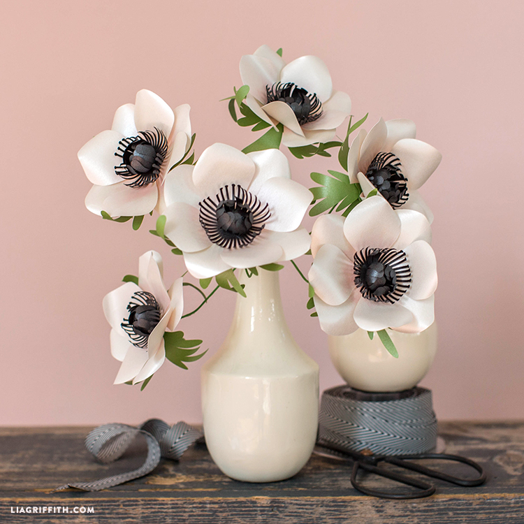 marianne anemone