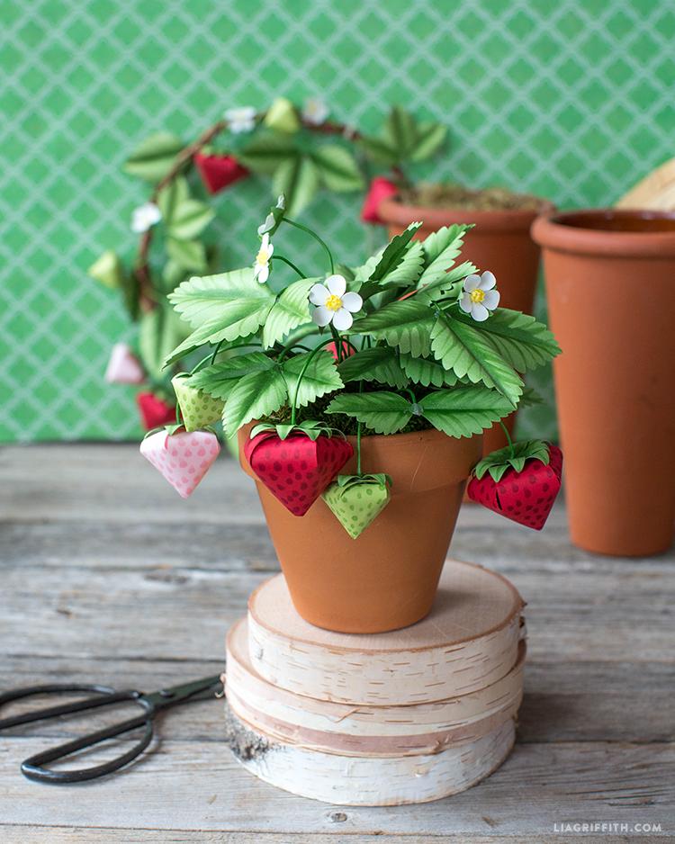 diy strawberry plant