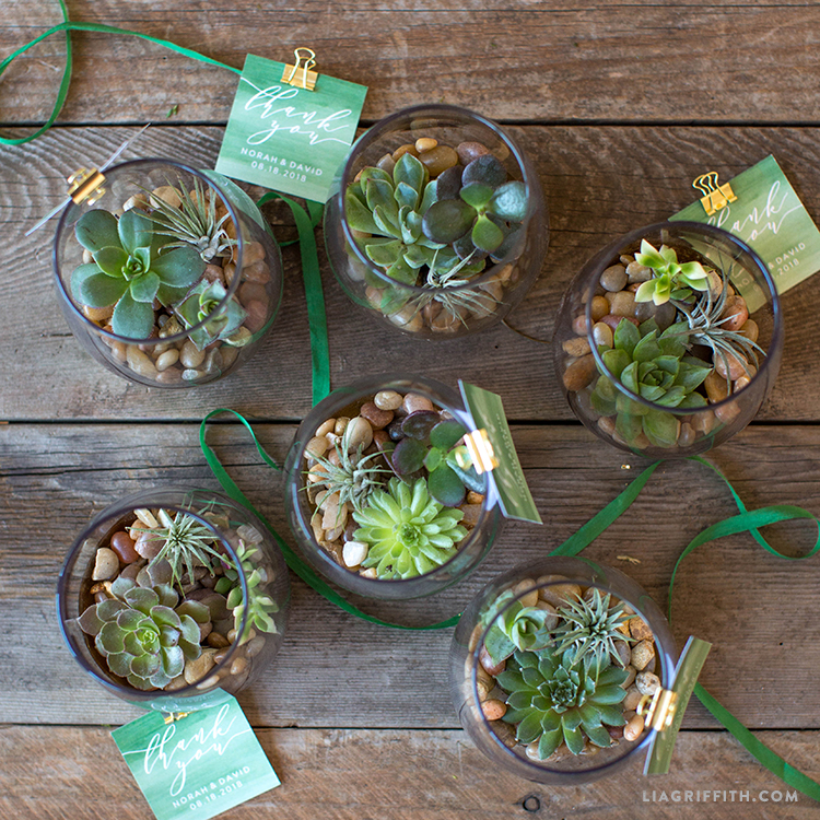 mini terrarium wedding favors