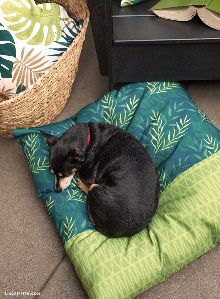 Close-up of tropical outdoor cushion with sleeping dog