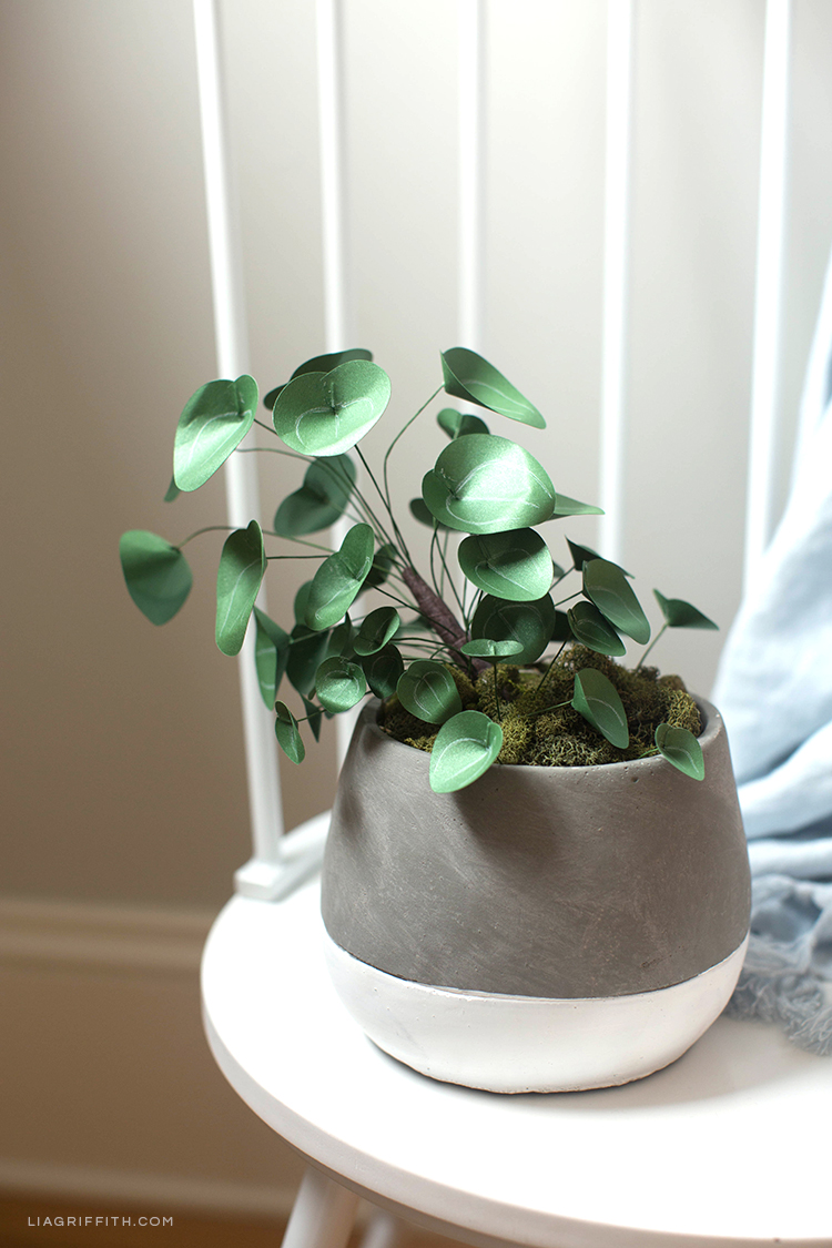 Chinese money plant (Pilea) in pot on chair with DIY linen throw