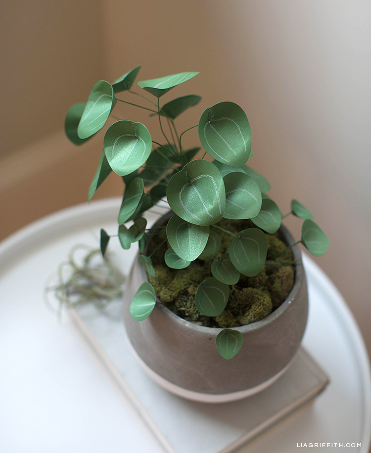 Top view of Chinese money plant in pot on book