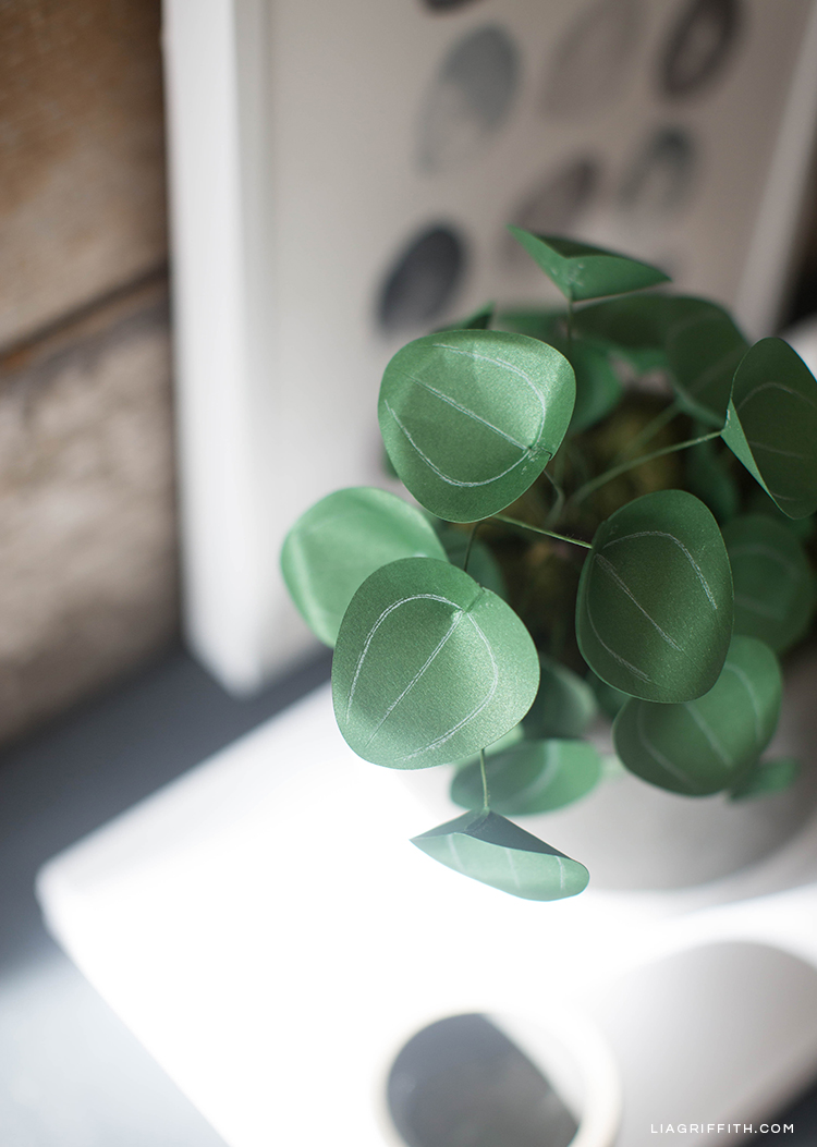 Close-up of leaves on Chinese money plant (Pilea plant)