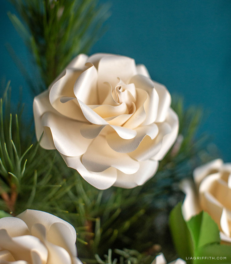 pearly off-white frosted paper Ecuadorian rose