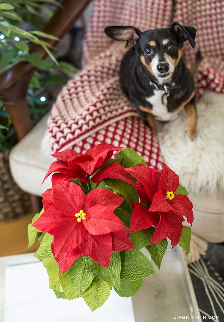 Crepe paper poinsettia plant in front of dog in chair