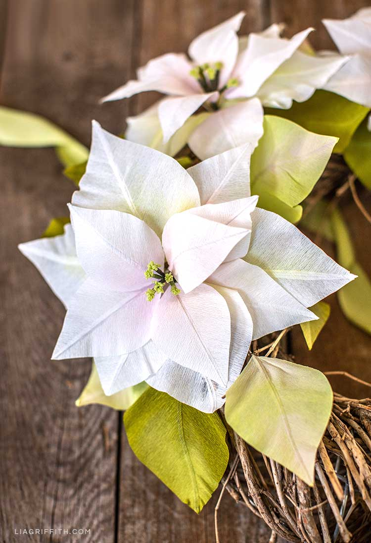 white crepe paper poinsettias featuring a tinge of light pink and light, bright green colors