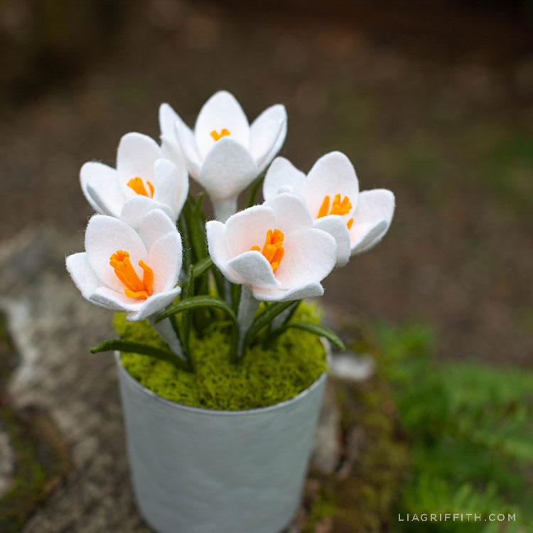felt Crocus flowers in pot outside
