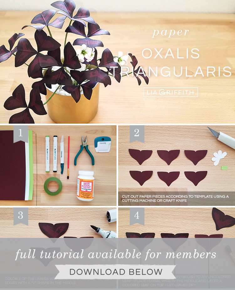 Photo tutorial for paper oxalis triangularis plant by Lia Griffith