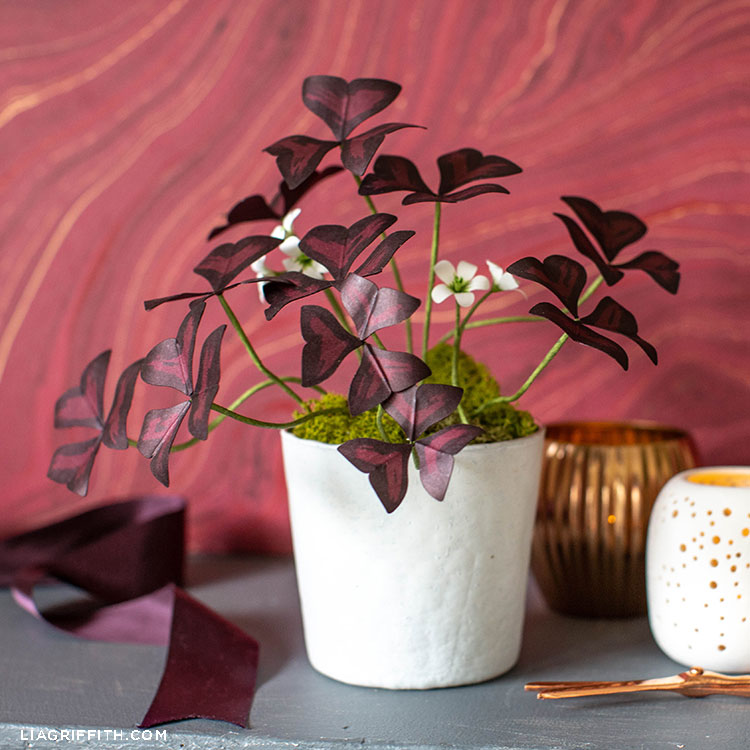 paper oxalis plant in white pot next to empty vases and purple ribbon against a red wall
