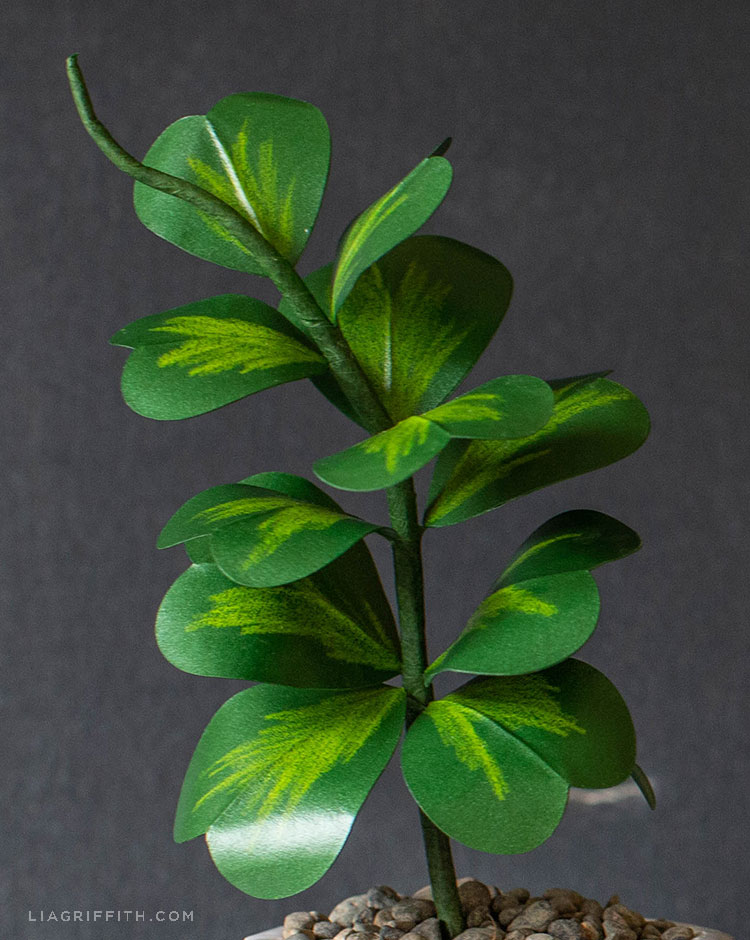 paper Hoya Kerrii plant
