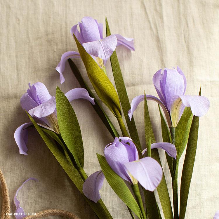 purple crepe paper dutch iris flowers on cream colored sheet