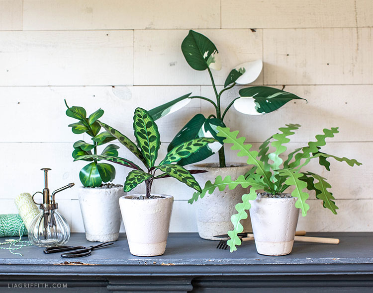 potted paper rattlesnake plant, zig-zag plant, white knight philodendron, and sweetheart hoya plant on mantel