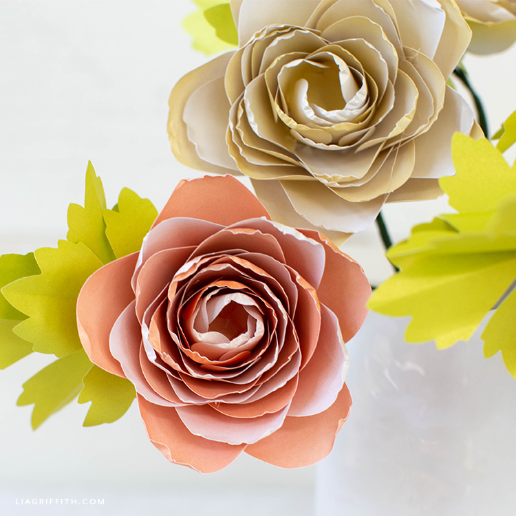 frosted paper ranunculus flowers with leaves